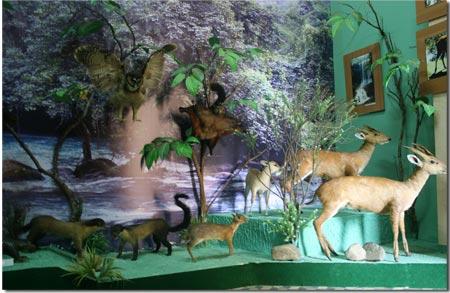 Bảo tàng Đà Lạt Lâm Đồng