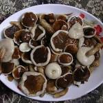 """Loài nấm """"độc quyền"""" của Phú Quốc – Nấm tràm"""