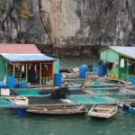 """Du lịch Hạ Long – phố văn hóa """"lênh đênh"""" trên vịnh"""