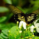 Choáng ngợp với công viên côn trùng ở Singapore