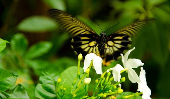 Công viên côn trùng Singapore