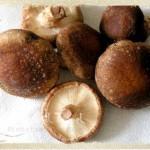 Nấm hương rừng thiên nhiên ưu ái cho Sapa