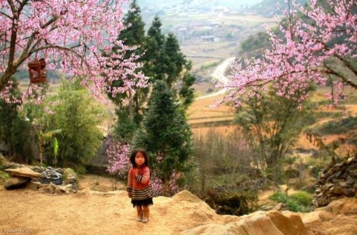Xuân Sapa bình yên và tinh khôi