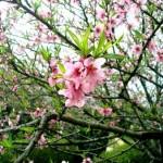 Sapa – Địa điểm du xuân lý tưởng tết Nguyên Đán