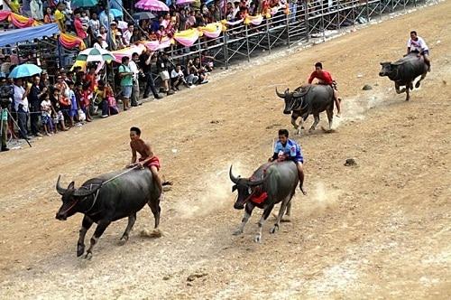 Lễ hội đua trâu Chonburi