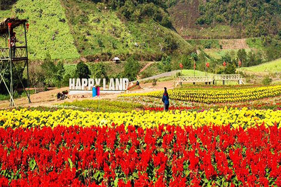 Vườn hoa Happyland Mộc Châu rục rỡ khoe sắc những ngày giáp Tết