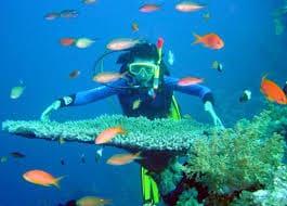 Lặn biển Cát Bà ngắm san hô