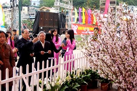 Lễ hội hoa anh đào Hạ Long 2015