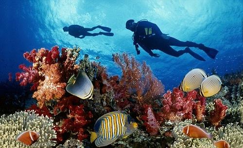 Lặn biển ngắm san hô- trải nghiệm khám phá dưới lòng đại dương