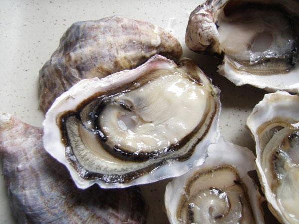 Hàu biển đặc sản Cô Tô