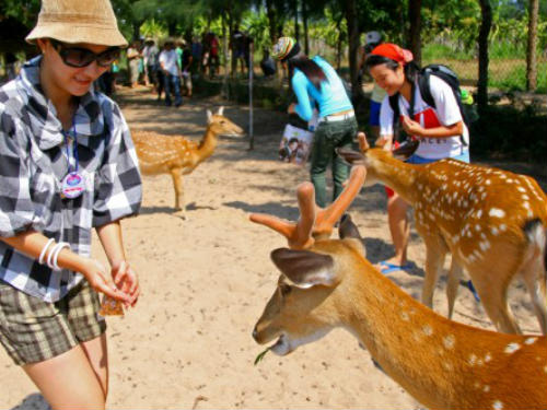 Nơi đây có nhiều hoạt động thu hút khách du lịch đến tham quan khám phá