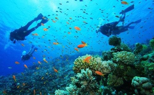 Trải nghiệm thú vị lặn ngắm san hô