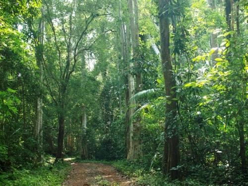 Khu vực sinh thái thiên nhiên của vườn quốc gia Phú QuốcKhu vực sinh thái thiên nhiên của vườn quốc gia Phú Quốc