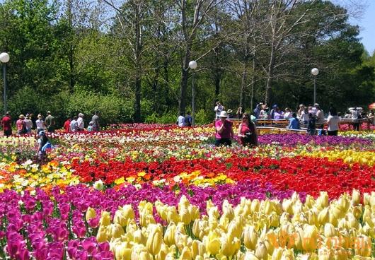 Đà Lạt- thành phố của thiên đường hoa khoe sắc