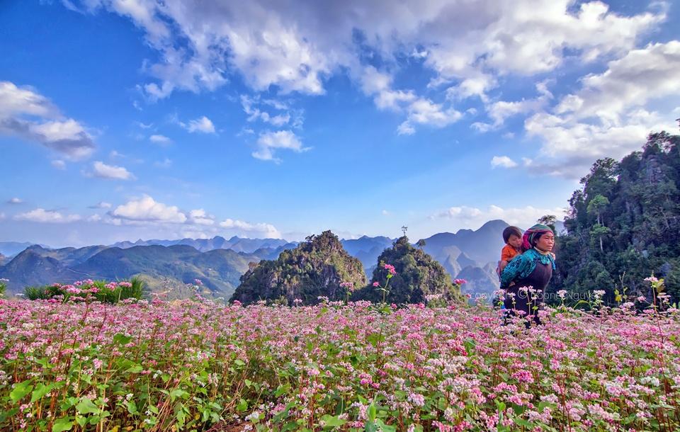 Một trong những địa điểm ngắm hoa tam giác mạch tuyệt đẹp ở Hà Giang
