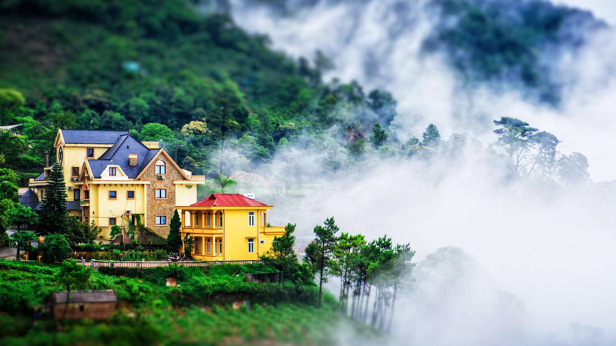 Tam Đảo mờ sương tuyệt đẹp