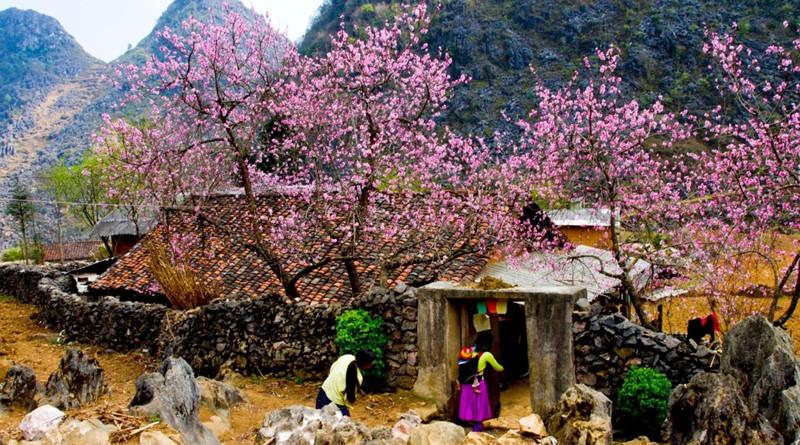 Hoa đào nở thắm các thung lũng Hà Giang mỗi dịp tháng 3 hàng năm