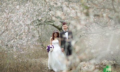 Các cặp đôi chụp ảnh cưới tại rừng mận trắng Mộc Châu
