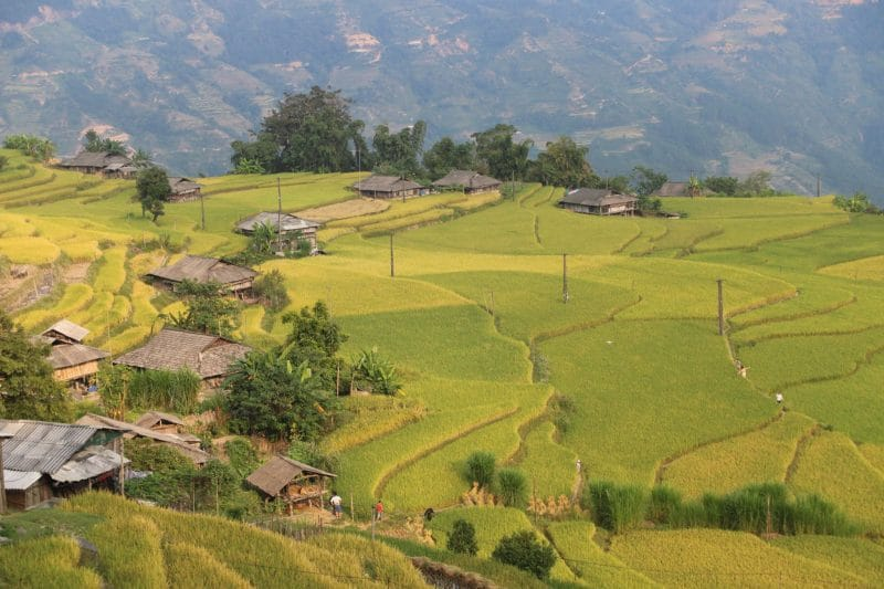 Bản Phùng là một trong những địa điểm lúa đẹp nhất ở Hoàng Su Phì