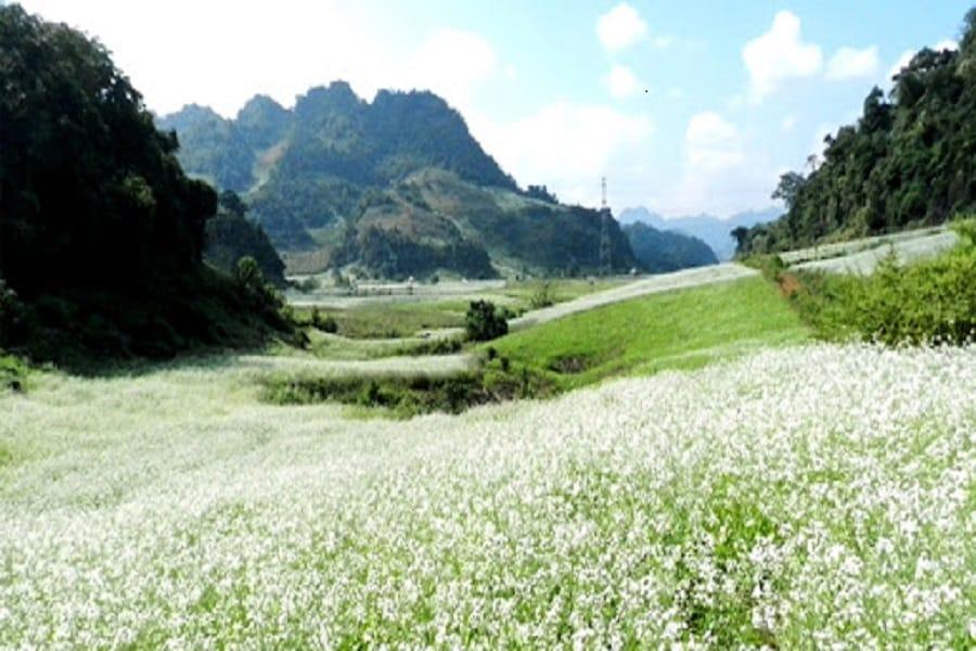 Tháng 12 là thời gia hoa cải ở Mộc Châu nở khắp núi rừng