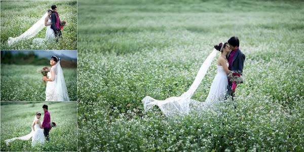 Nhiều cặp đôi lựa chọn cánh đồng hoa cải để chụp ảnh cưới