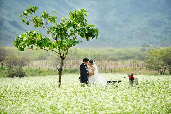 Mùa hoa cải trắng- điểm hẹn của những cặp uyên ương chụp ảnh cưới
