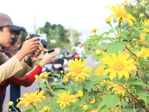 Hoa dã quỳ là nguồn cảm hứng của biết bao nhiếp ảnh gia