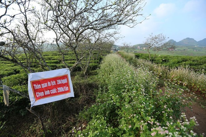 Dịch vụ tham quan vườn hoa tam giác mạch giúp chủ nhân của khu vườn tăng thêm thu nhập