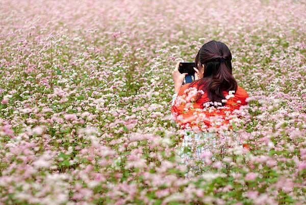 Những bức ảnh kỉ niệm đẹp tuyệt vời giữa cánh đồng hoa tam giác mạch