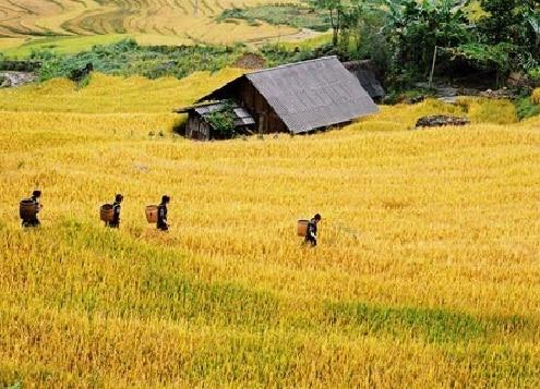 Vẻ đẹp cuốn hút, dịu dàng của thung lũng Mai Châu