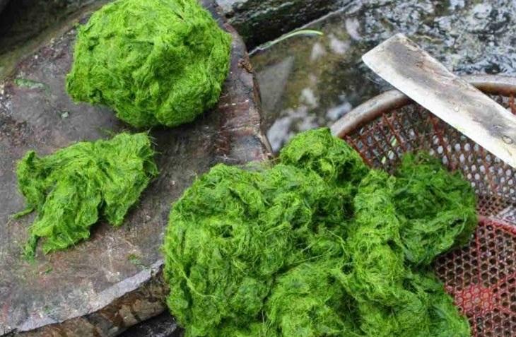 Muốn có món rêu ngon thì sau khi xé tơi rêu ra mới thái