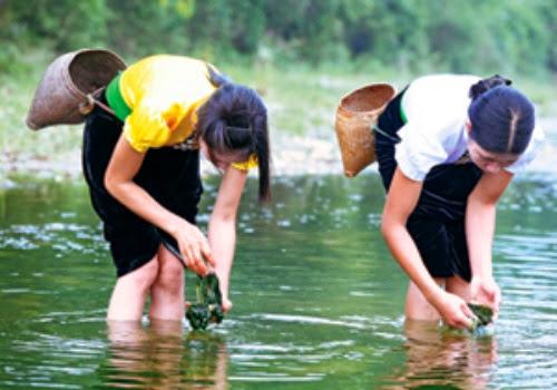 Rêu tươi được vớt tại suối về để chế biếnRêu tươi được vớt tại suối về để chế biến