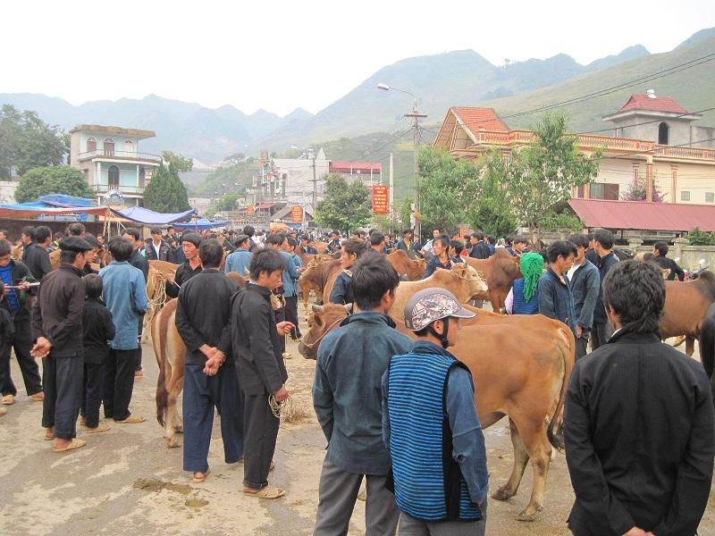 Phiên chợ bò nổi tiếng tại Hà Giang