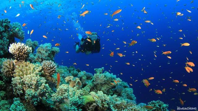 Du khách lặn biển ngắm san hô và các sinh vật biển tại đảo Hòn Mun