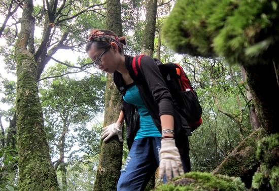 Tam Đảo - Địa điểm lý tưởng để trekking