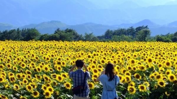 Những mùa hoa gọi mời khách du lịch dịp cuối năm