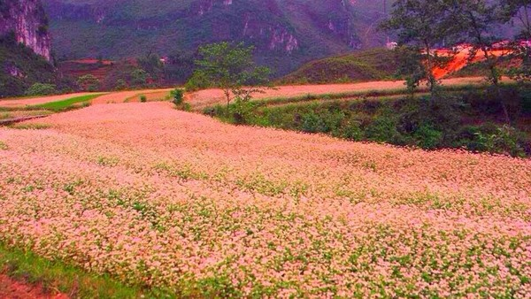 Đặc sắc lễ hội hoa tam giác mạch Hà Giang năm 2015