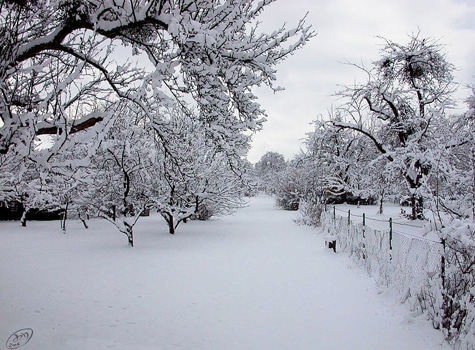 Những trải nghiệm thú vị khi du lịch Hàn Quốc mùa đông