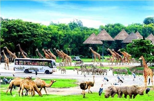 Hòn đảo Phú Quốc khai trương Công viên bảo tồn động vật Vinpearl Safari