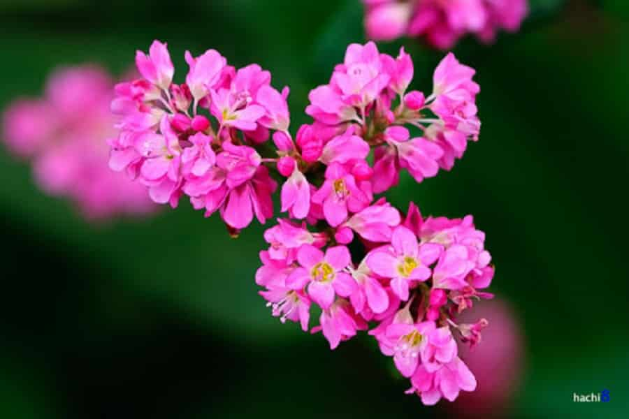 Sắc hoa rực rỡ