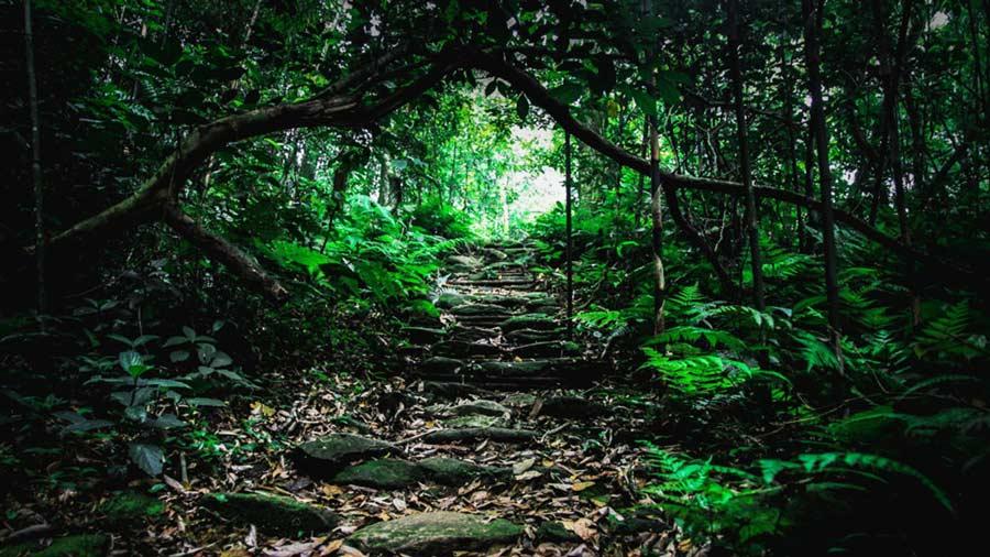 Đường leo núi chinh phục đỉnh Rùng Rình