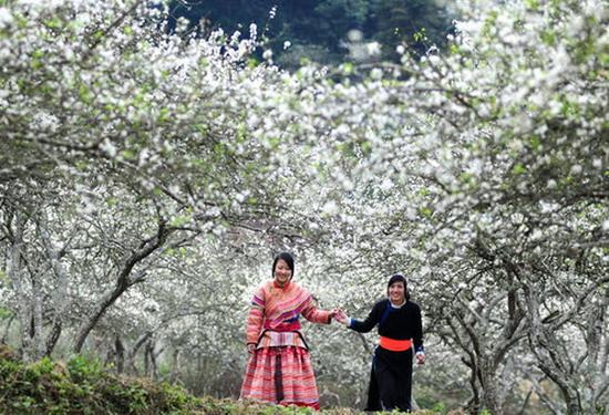Mai Châu mùa hoa mận nở