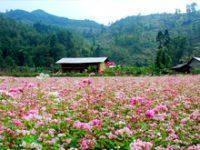 Kinh nghiệm du lịch Hà Giang đầy đủ chi tiết từ A-Z