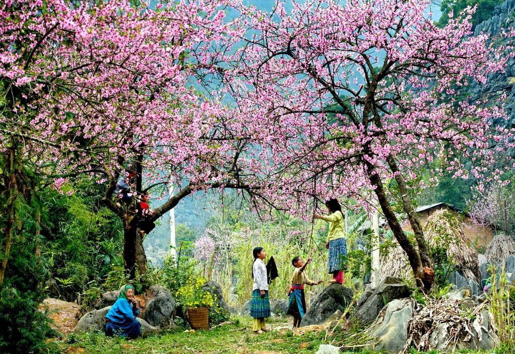 Mùa xuân, Sapa ngập tràn sắc màu của hoa đào, hoa mận, hoa lê