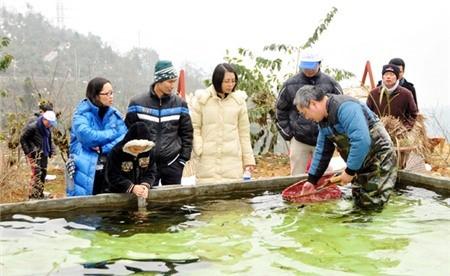 Khách hàng tự chọn con cá hồi mình muốn khi ăn uống ở Sapa