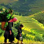 Ruộng bậc thang Sapa – Top 7 ruộng bậc thang kỳ vĩ nhất thế giới
