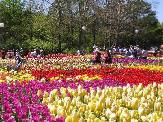 Cánh đồng hoa mùa xuân tại Đà Lạt.