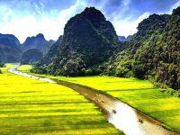 Chèo thuyền qua cánh đồng lúa chín vàng tại Tam Cốc là trải nghiệm vô cùng đáng nhớ