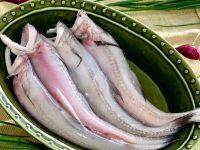 Cá khoai đem lại giá trị dinh dưỡng cao
