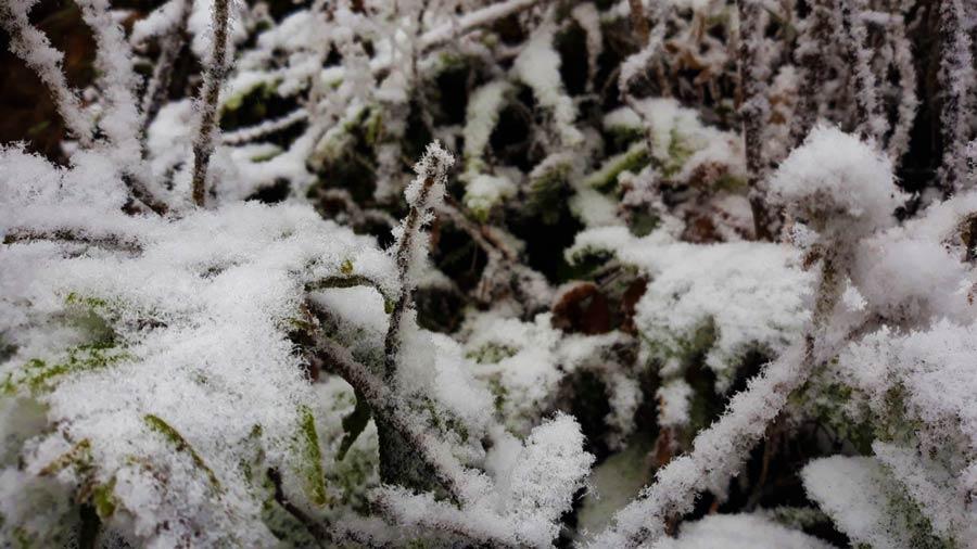 Tuyết phủ trắng những tán cây, ngọn cỏ